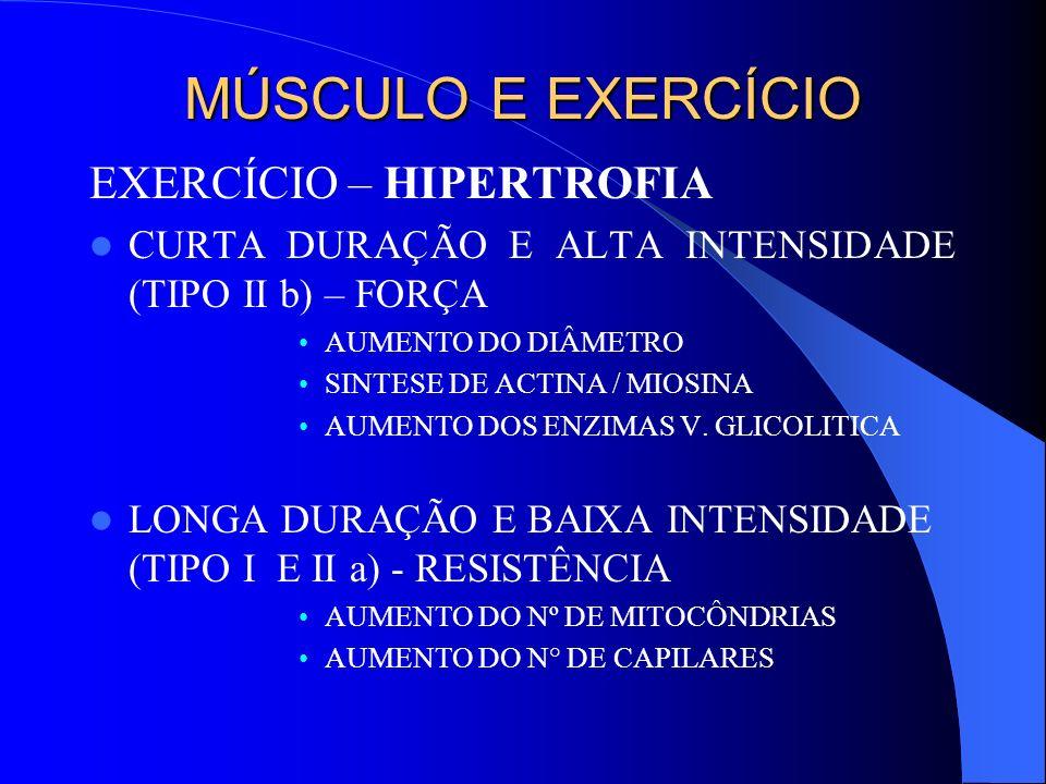 MÚSCULO E EXERCÍCIO EXERCÍCIO – HIPERTROFIA