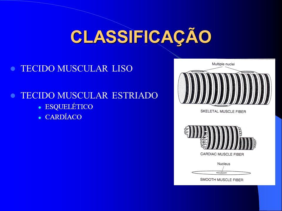 CLASSIFICAÇÃO TECIDO MUSCULAR LISO TECIDO MUSCULAR ESTRIADO