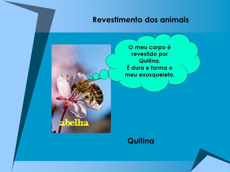 Revestimento dos animais Quitina