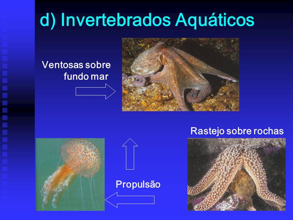 d) Invertebrados Aquáticos