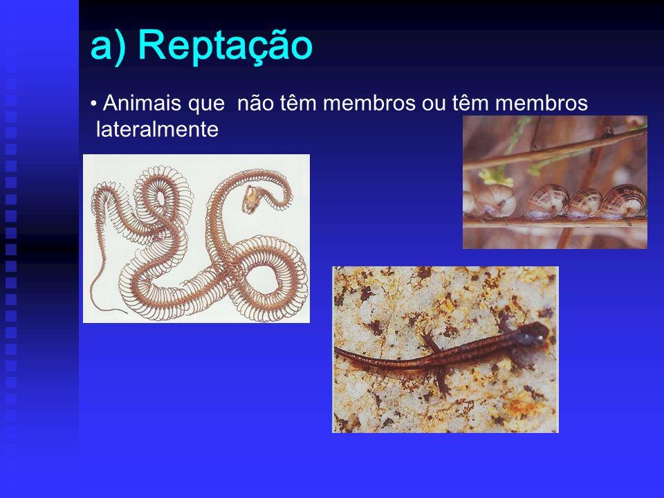 a) Reptação Animais que não têm membros ou têm membros lateralmente
