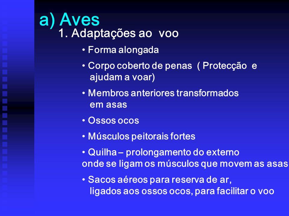 a) Aves 1. Adaptações ao voo Forma alongada