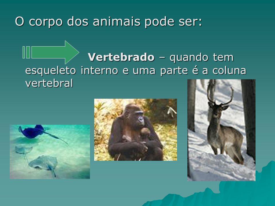 O corpo dos animais pode ser: