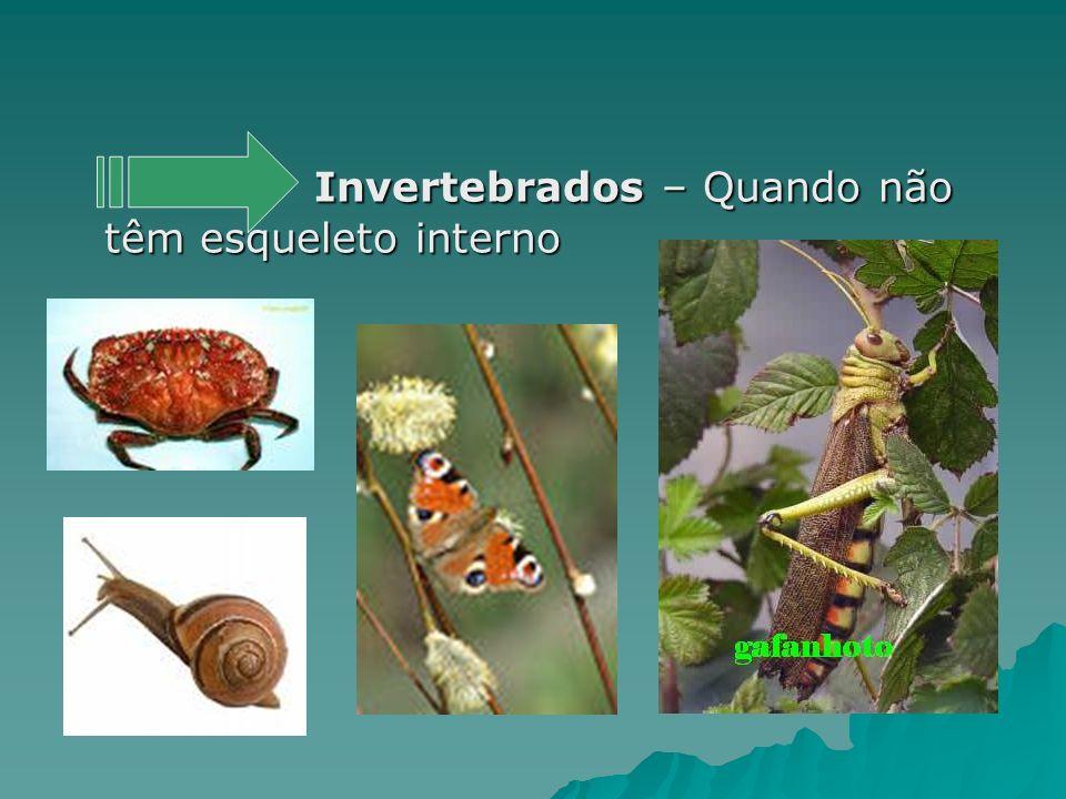 Invertebrados – Quando não têm esqueleto interno