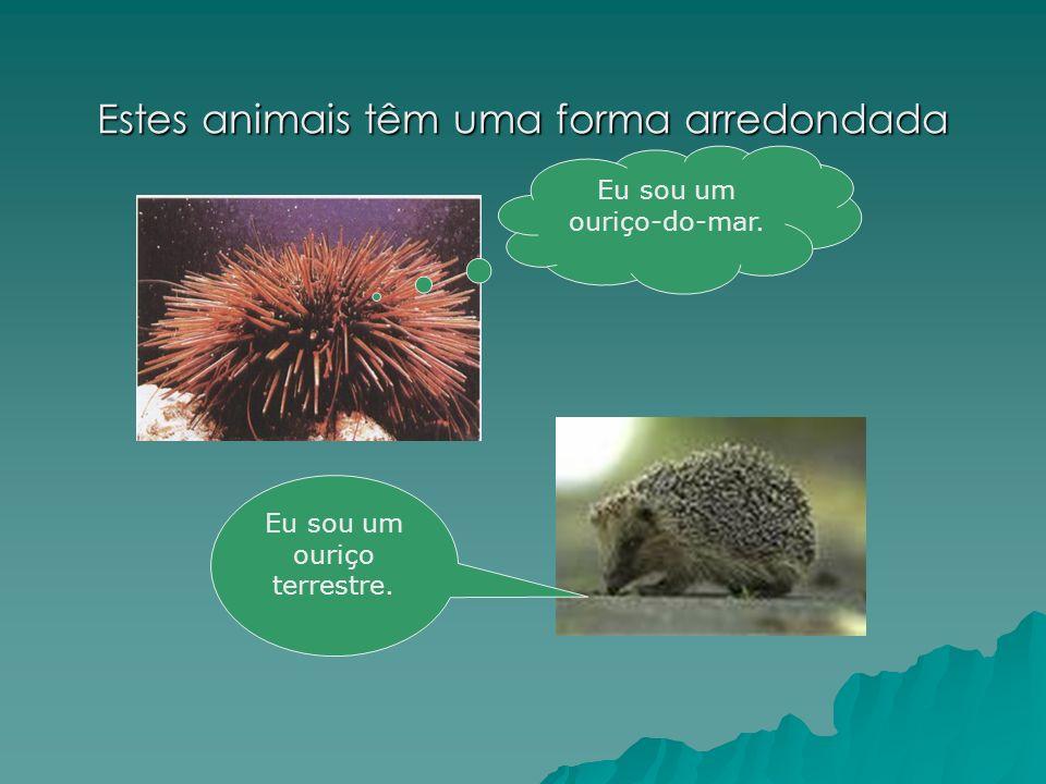 Estes animais têm uma forma arredondada