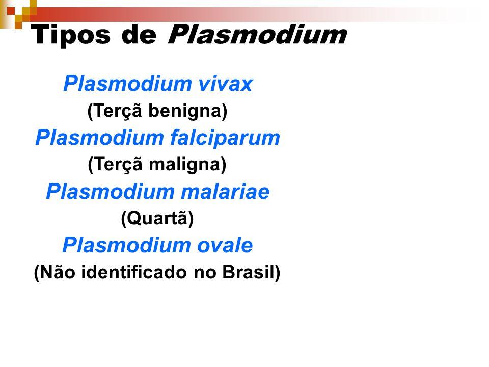Plasmodium falciparum (Não identificado no Brasil)