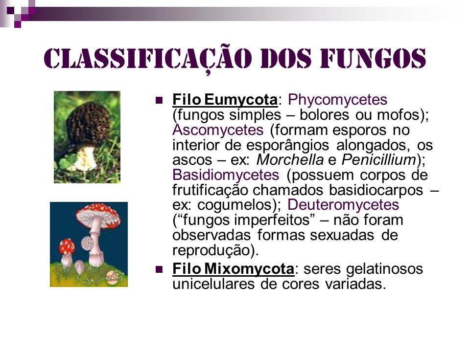 Classificação dos fungos