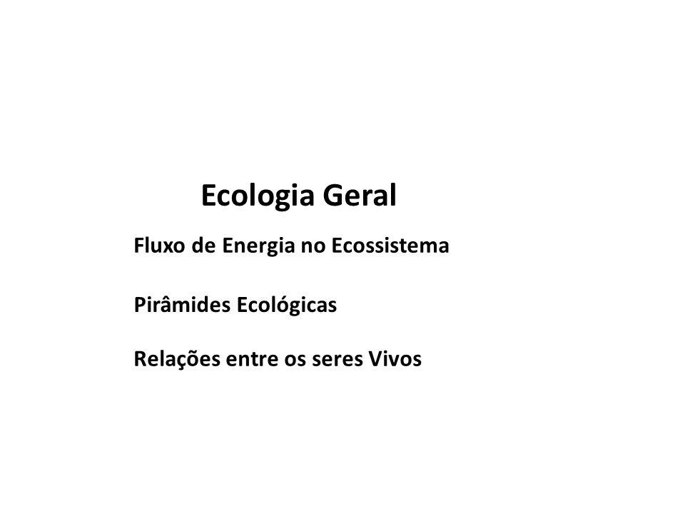 Ecologia Geral Fluxo de Energia no Ecossistema Pirâmides Ecológicas