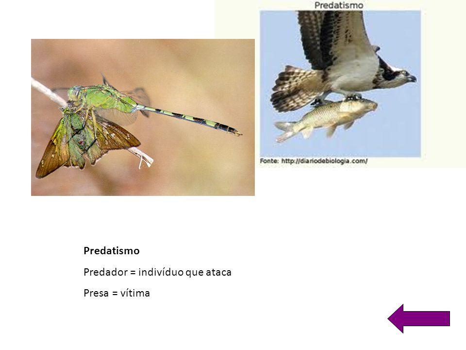 Predatismo Predador = indivíduo que ataca Presa = vítima