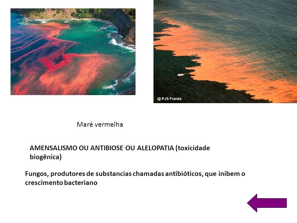 Maré vermelha AMENSALISMO OU ANTIBIOSE OU ALELOPATIA (toxicidade biogênica)