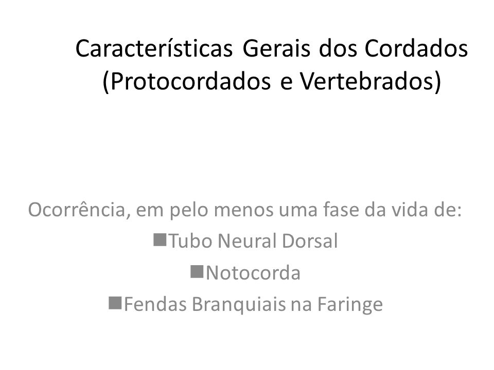 Características Gerais dos Cordados (Protocordados e Vertebrados)