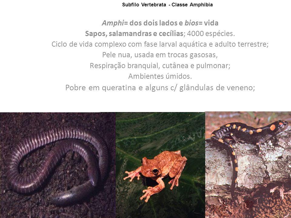 Amphi= dos dois lados e bios= vida