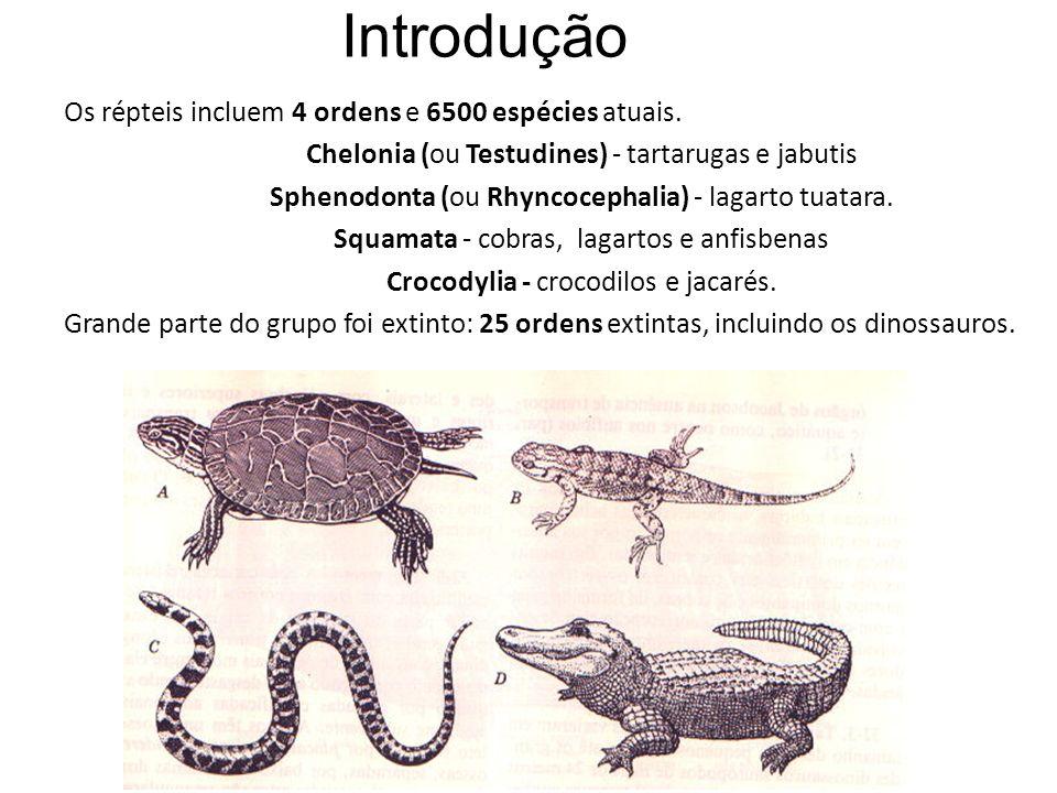Introdução Os répteis incluem 4 ordens e 6500 espécies atuais.