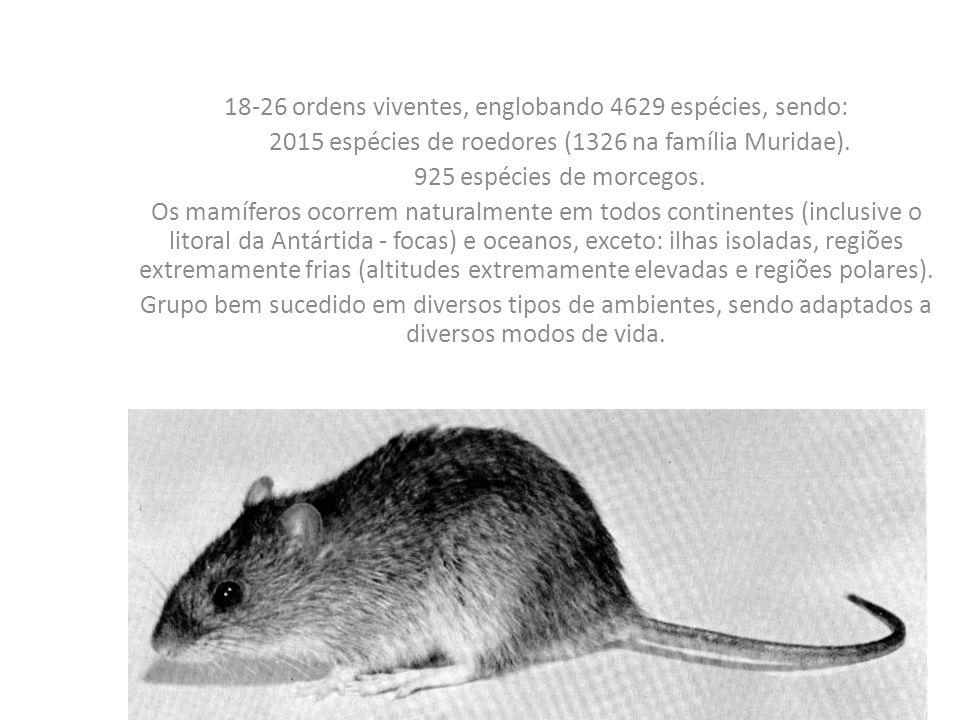 18-26 ordens viventes, englobando 4629 espécies, sendo: