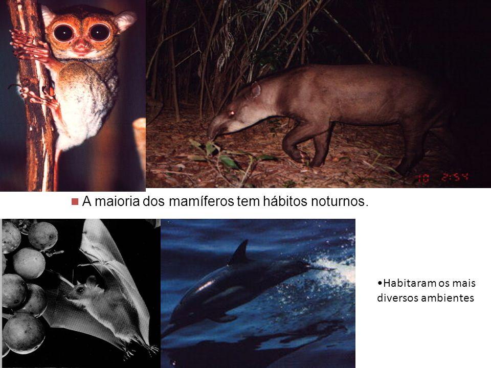 A maioria dos mamíferos tem hábitos noturnos.