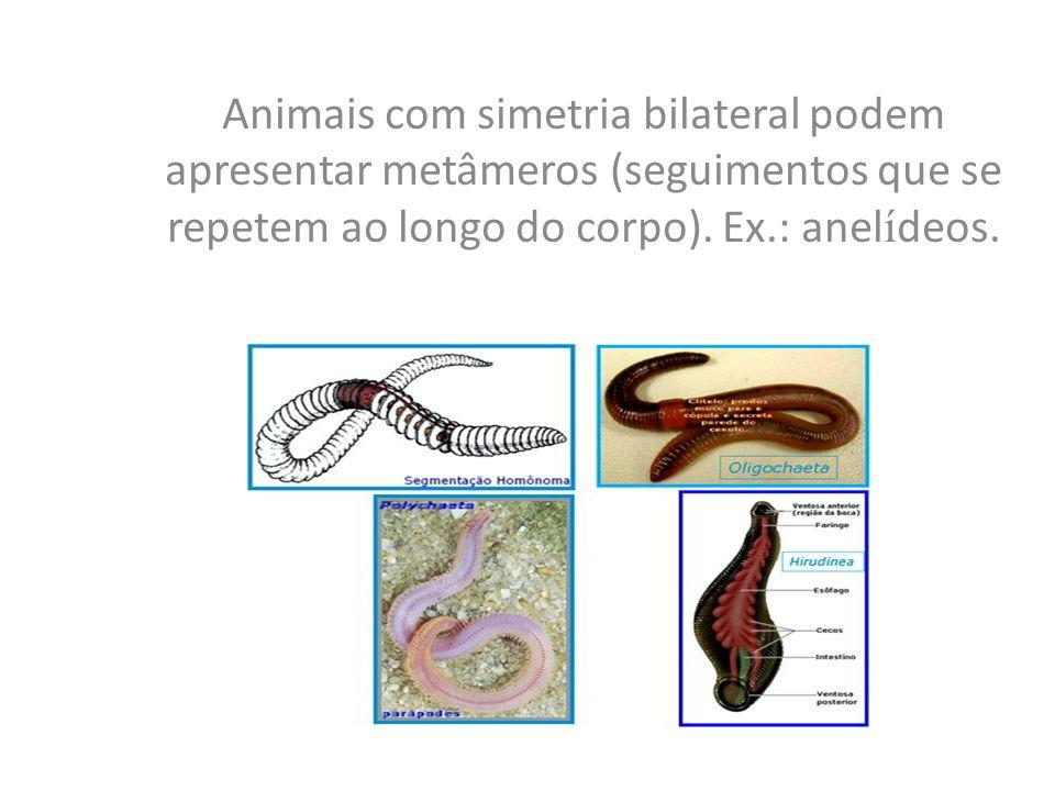 Animais com simetria bilateral podem apresentar metâmeros (seguimentos que se repetem ao longo do corpo).