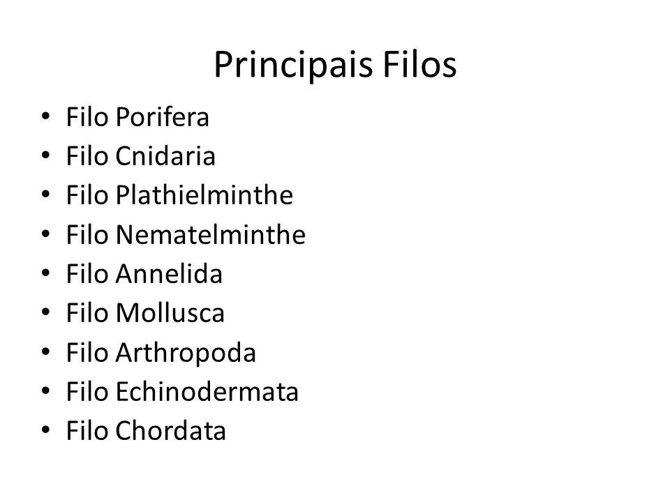 Principais Filos Filo Porifera Filo Cnidaria Filo Plathielminthe