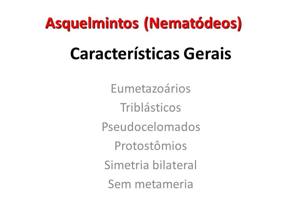 Asquelmintos (Nematódeos) Características Gerais