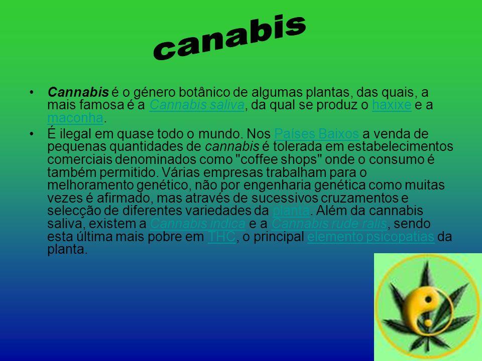 canabis Cannabis é o género botânico de algumas plantas, das quais, a mais famosa é a Cannabis saliva, da qual se produz o haxixe e a maconha.