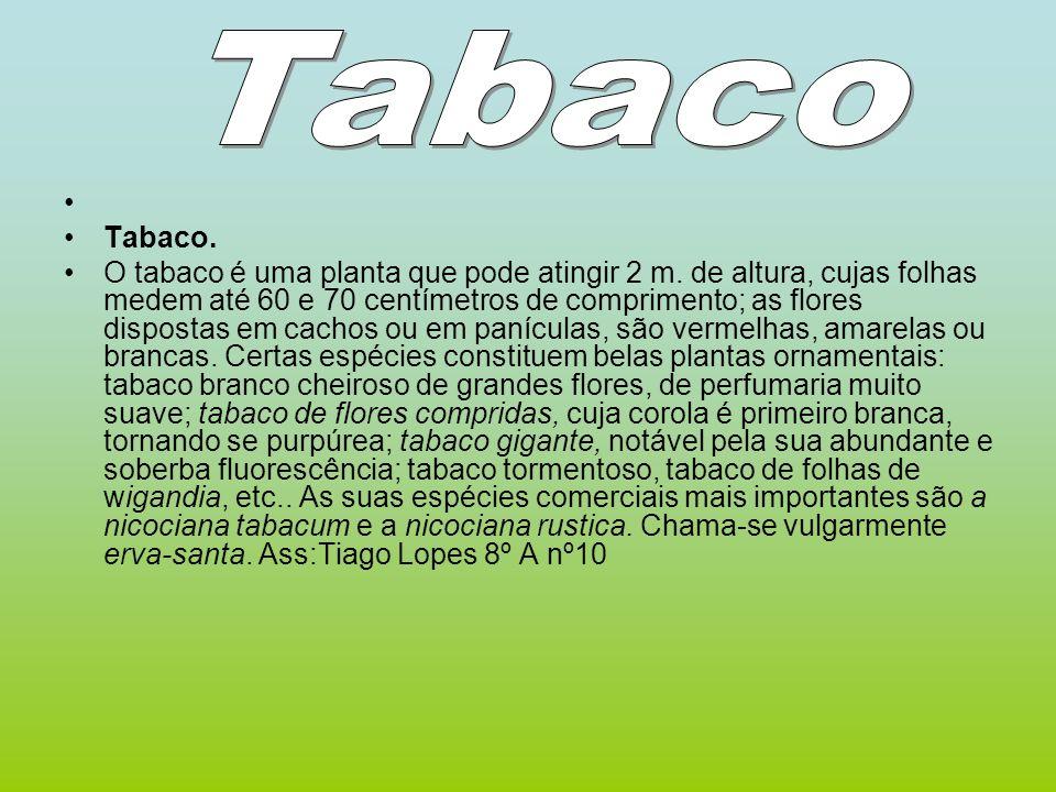 Tabaco Tabaco.