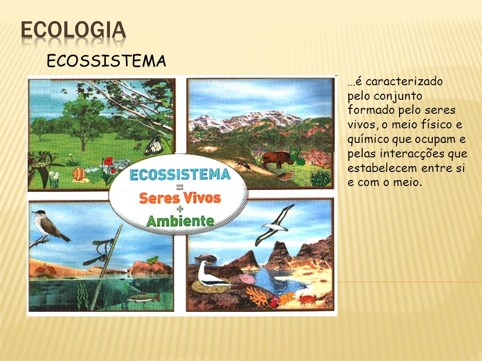 ecologia ECOSSISTEMA.