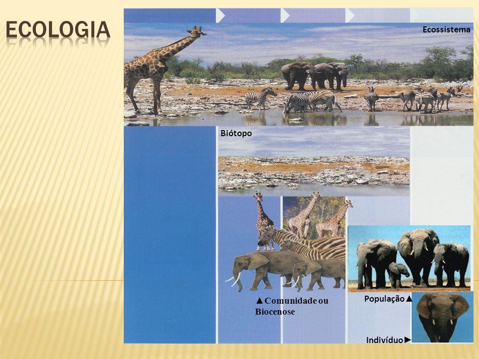 ecologia Ecossistema Biótopo População▲ ▲Comunidade ou Biocenose