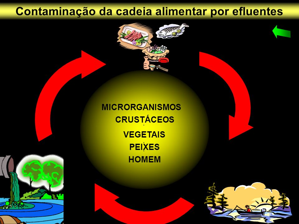 Contaminação da cadeia alimentar por efluentes