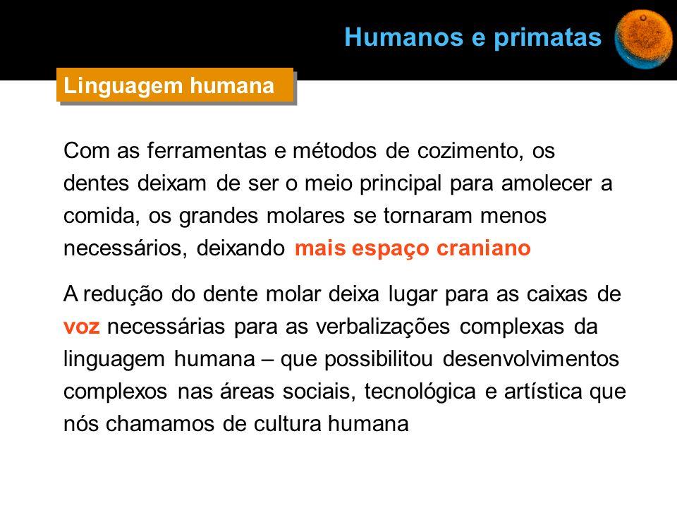Humanos e primatas Linguagem humana