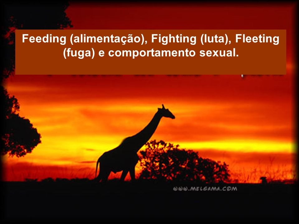 Feeding (alimentação), Fighting (luta), Fleeting (fuga) e comportamento sexual.