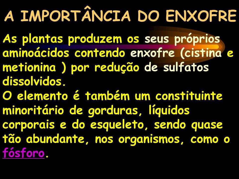 A IMPORTÂNCIA DO ENXOFRE