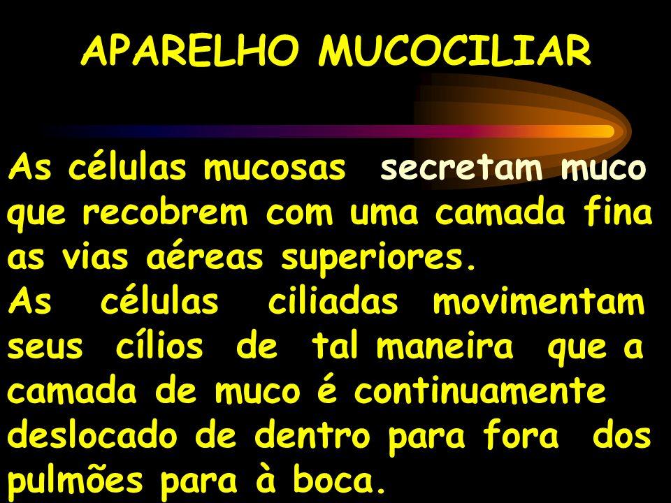 APARELHO MUCOCILIAR As células mucosas secretam muco que recobrem com uma camada fina as vias aéreas superiores.