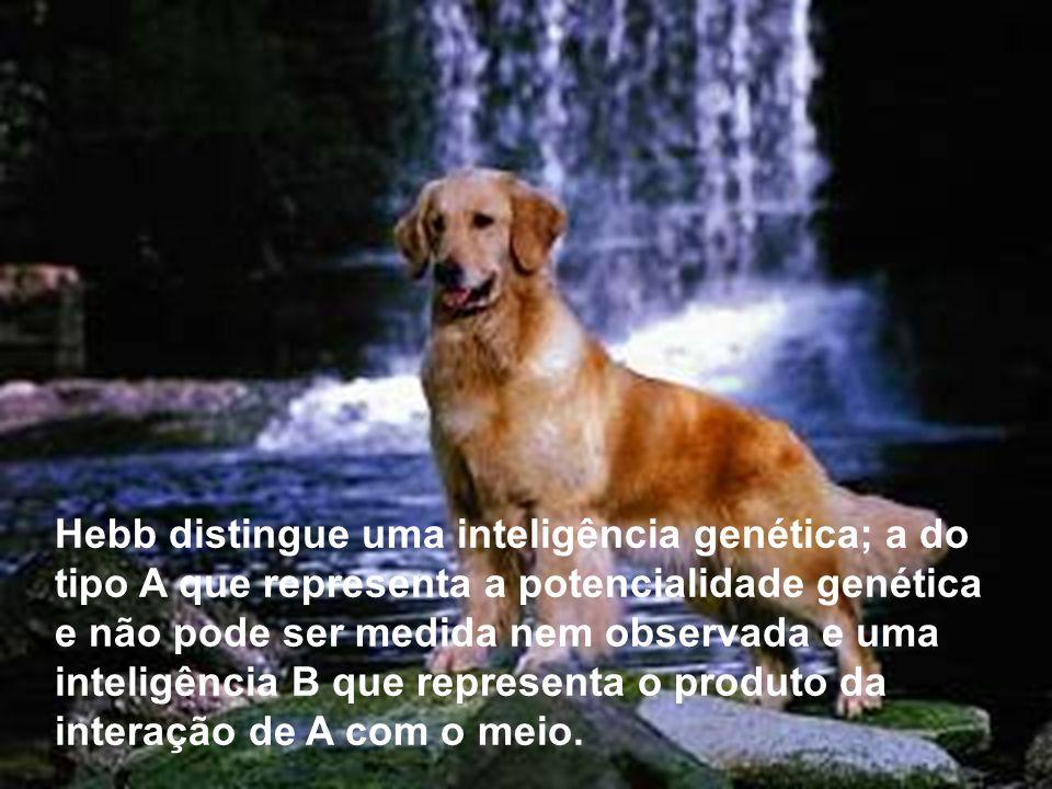 Hebb distingue uma inteligência genética; a do tipo A que representa a potencialidade genética e não pode ser medida nem observada e uma inteligência B que representa o produto da interação de A com o meio.