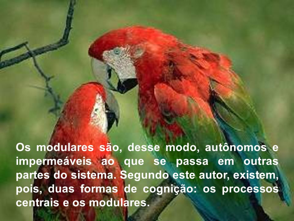 Os modulares são, desse modo, autônomos e impermeáveis ao que se passa em outras partes do sistema.