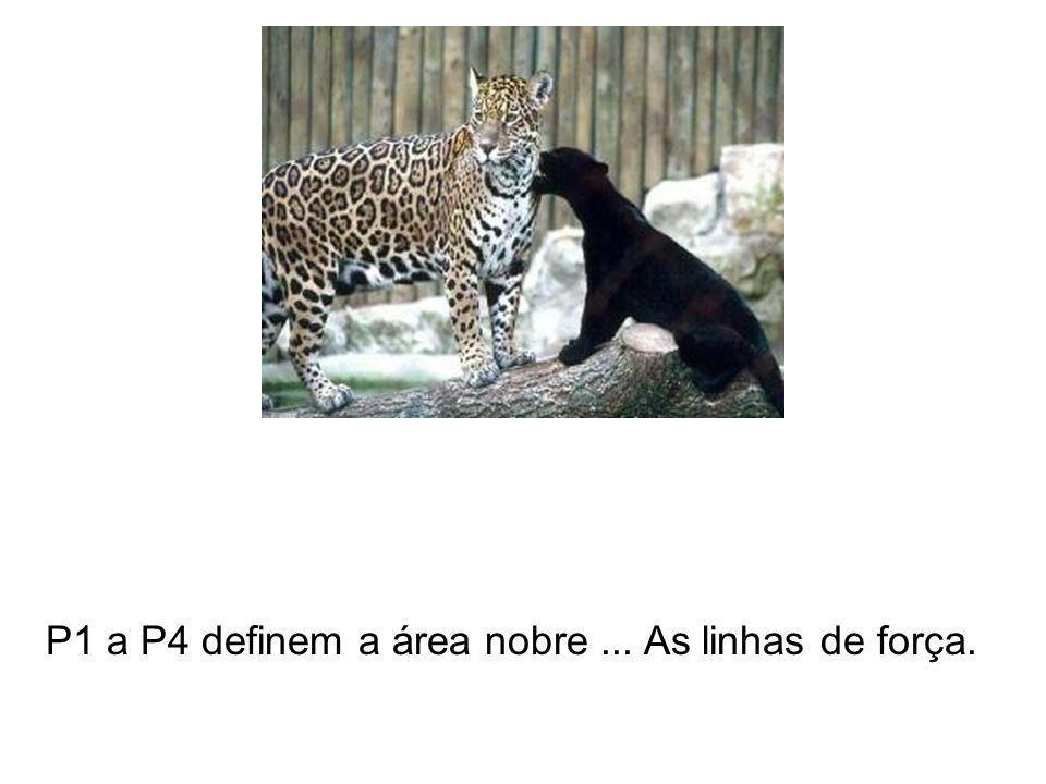 P1 a P4 definem a área nobre ... As linhas de força.