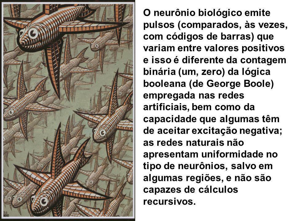 O neurônio biológico emite pulsos (comparados, às vezes, com códigos de barras) que variam entre valores positivos e isso é diferente da contagem binária (um, zero) da lógica booleana (de George Boole) empregada nas redes artificiais, bem como da capacidade que algumas têm de aceitar excitação negativa; as redes naturais não apresentam uniformidade no tipo de neurônios, salvo em algumas regiões, e não são capazes de cálculos recursivos.