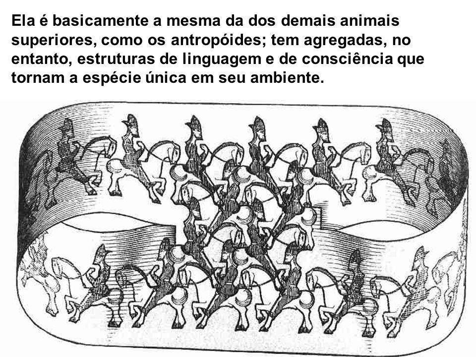 Ela é basicamente a mesma da dos demais animais superiores, como os antropóides; tem agregadas, no entanto, estruturas de linguagem e de consciência que tornam a espécie única em seu ambiente.