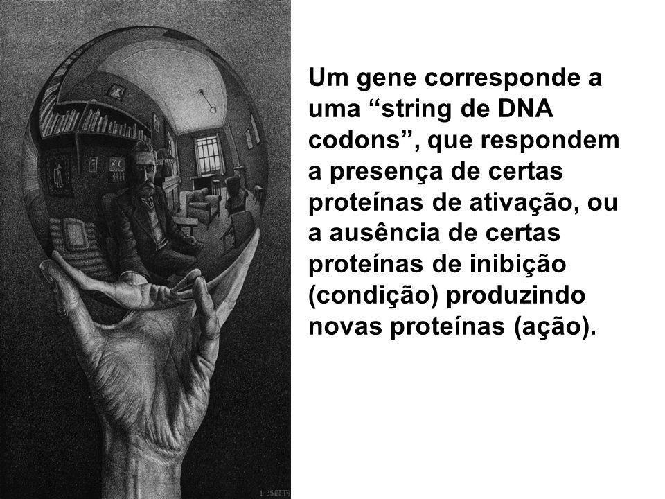 Um gene corresponde a uma string de DNA codons , que respondem a presença de certas proteínas de ativação, ou a ausência de certas proteínas de inibição (condição) produzindo novas proteínas (ação).