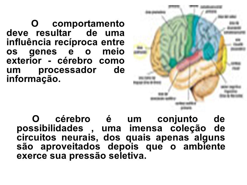 O comportamento deve resultar de uma influência recíproca entre os genes e o meio exterior - cérebro como um processador de informação.