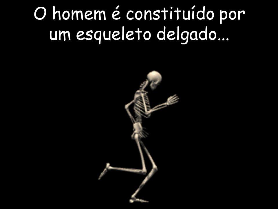 O homem é constituído por um esqueleto delgado...