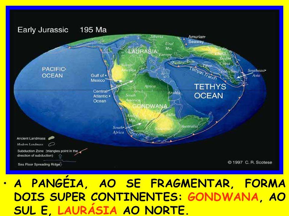 A PANGÉIA, AO SE FRAGMENTAR, FORMA DOIS SUPER CONTINENTES: GONDWANA, AO SUL E, LAURÁSIA AO NORTE.