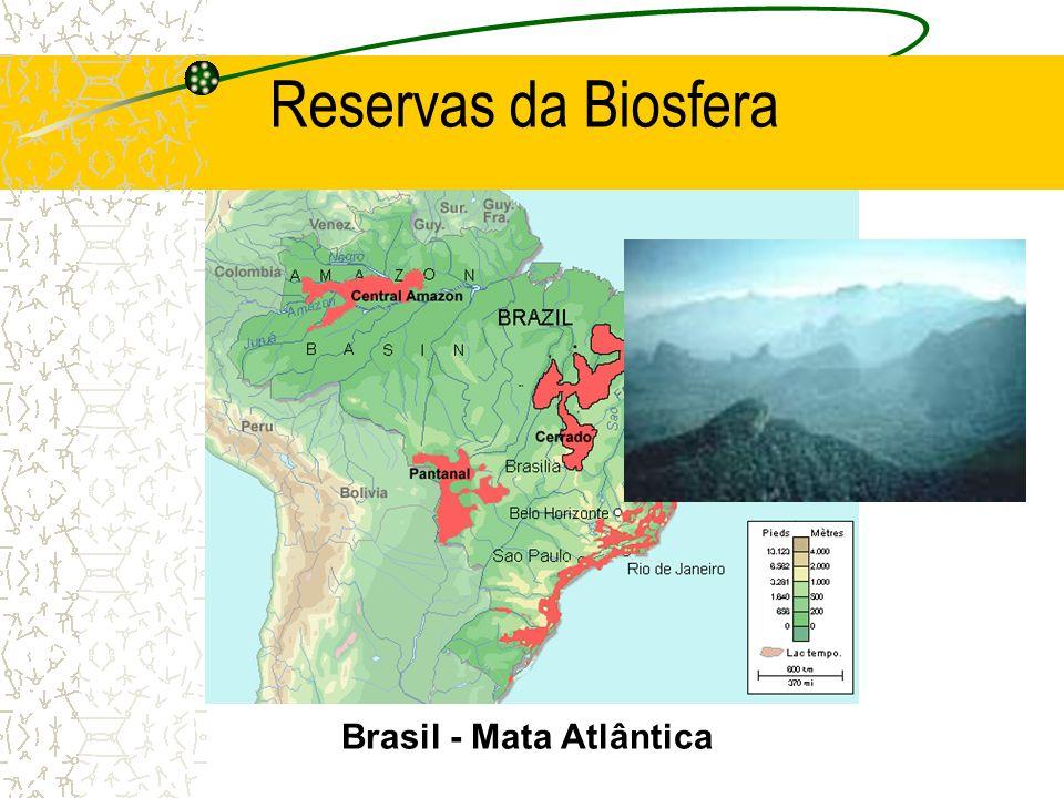 Brasil - Mata Atlântica