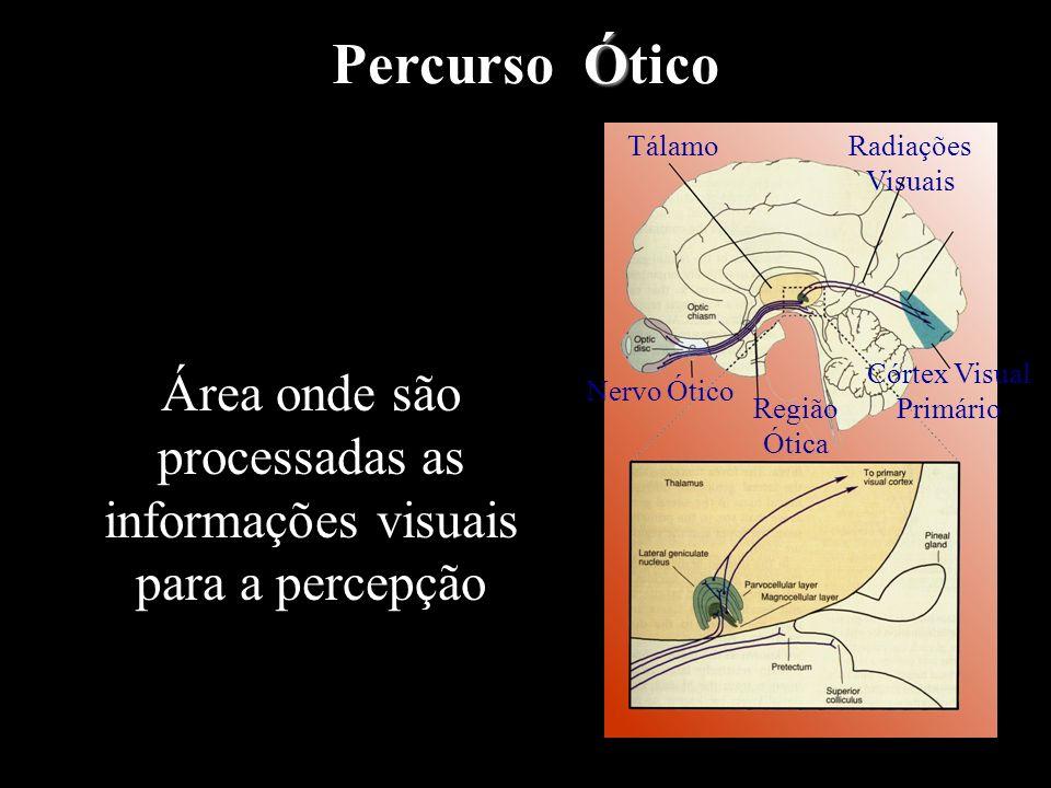 Percurso Ótico Tálamo. Radiações Visuais. Área onde são processadas as informações visuais para a percepção.