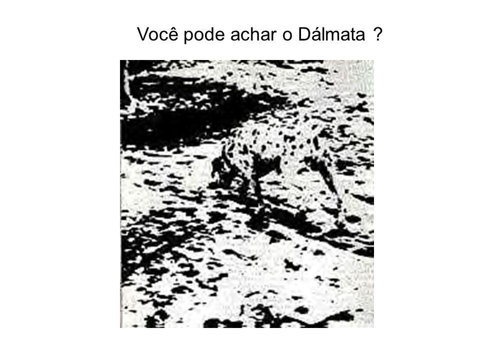 Você pode achar o Dálmata