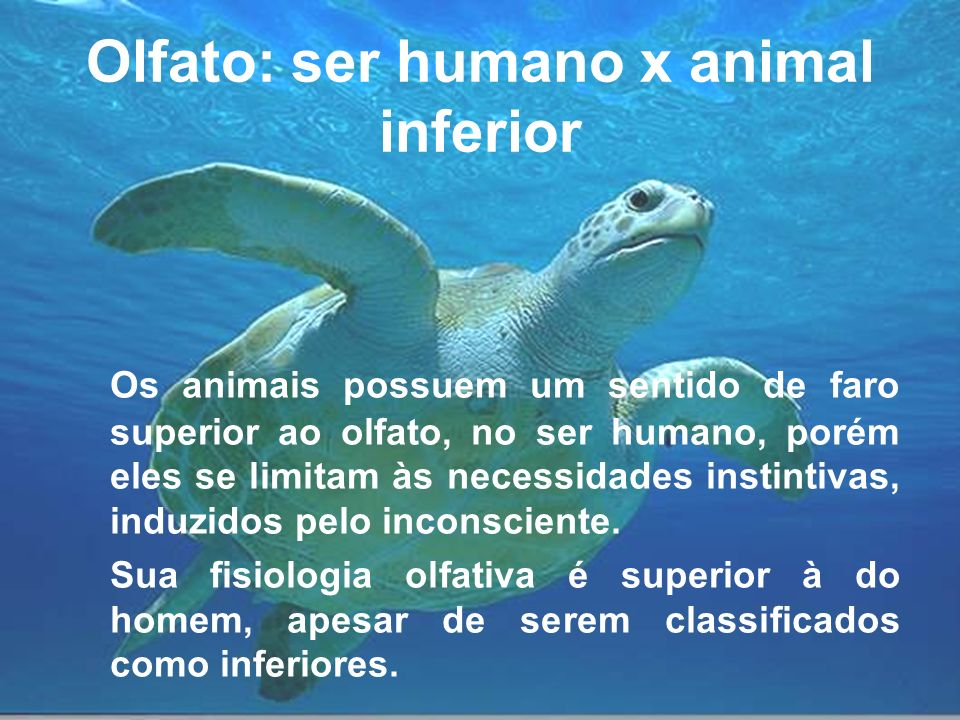 Olfato: ser humano x animal inferior