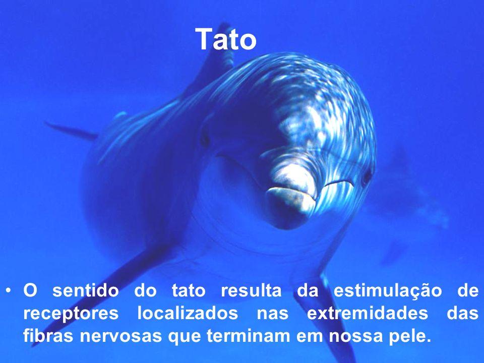 TatoO sentido do tato resulta da estimulação de receptores localizados nas extremidades das fibras nervosas que terminam em nossa pele.