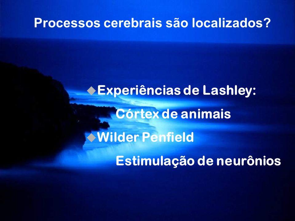 Processos cerebrais são localizados