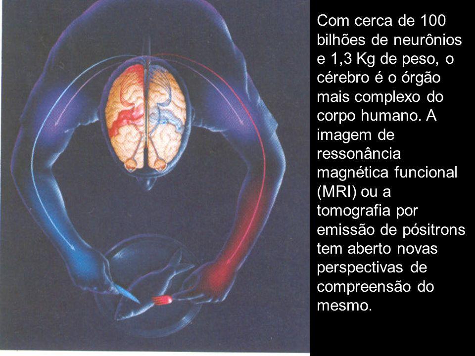 Com cerca de 100 bilhões de neurônios e 1,3 Kg de peso, o cérebro é o órgão mais complexo do corpo humano.