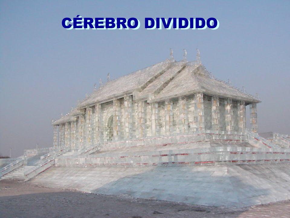CÉREBRO DIVIDIDO
