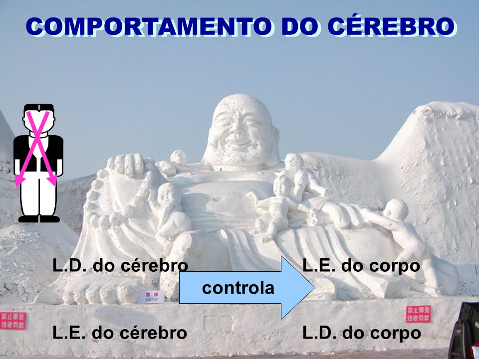 COMPORTAMENTO DO CÉREBRO