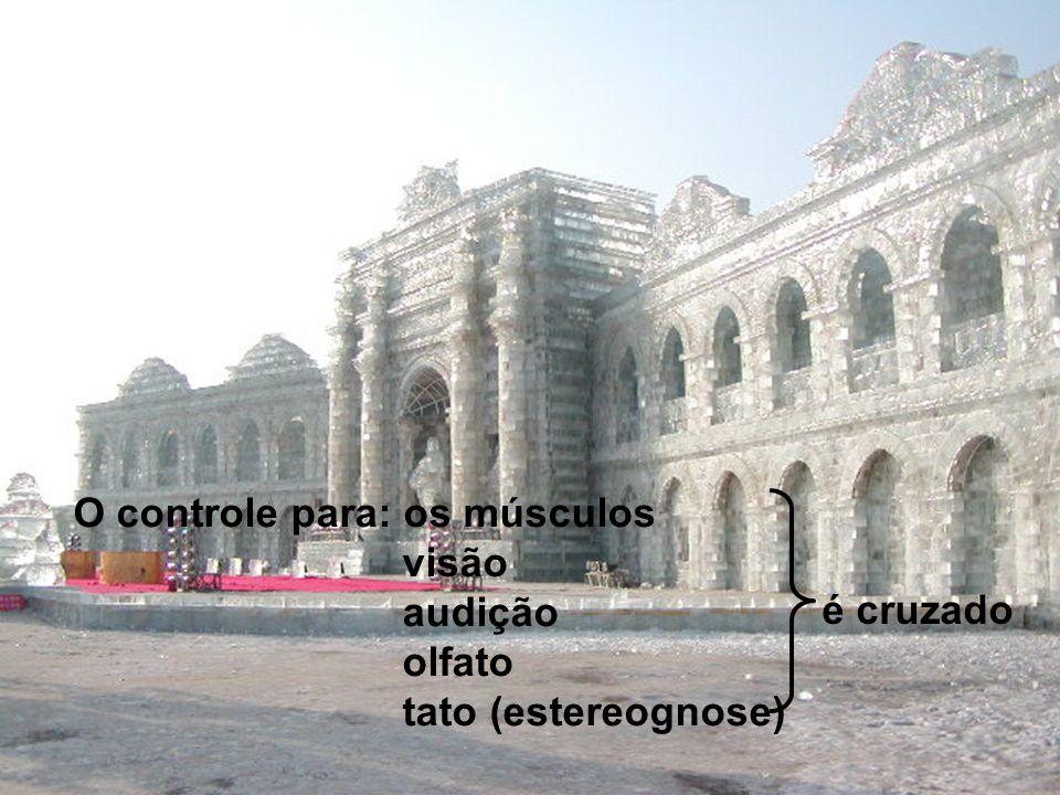 O controle para: os músculos